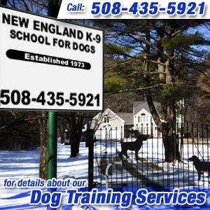 Dog Trainer Hopkinton, MA
